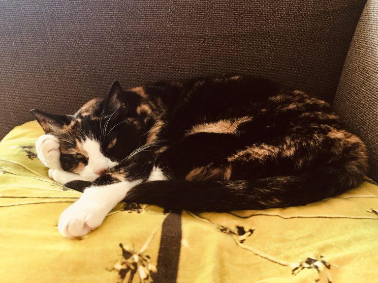 Een kat op een kussen die met haar pootje tegen haar hoofd sip kijkt