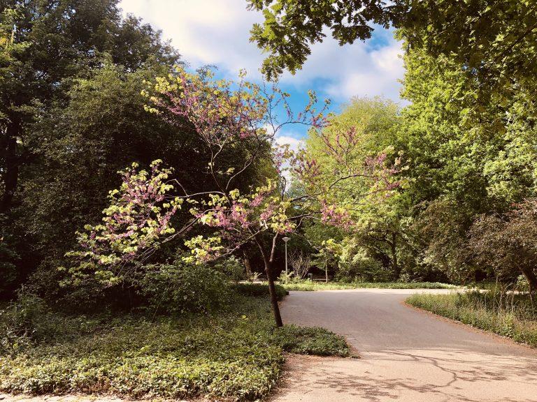 Een park met een boom die in bloei staat