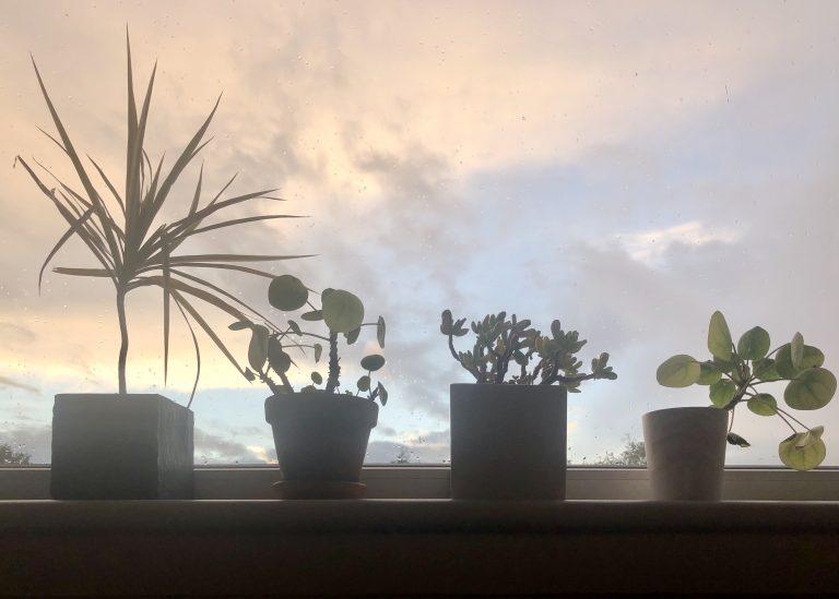 Vier plantjes voor het raam met tegenlicht, daarachter een onrustige lucht met roze wolken
