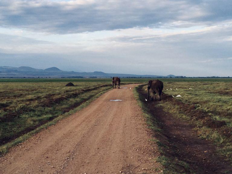 Een weg die zich uitstrekt met heuvels op de achtergrond. Er lopen twee olifanten bij de weg